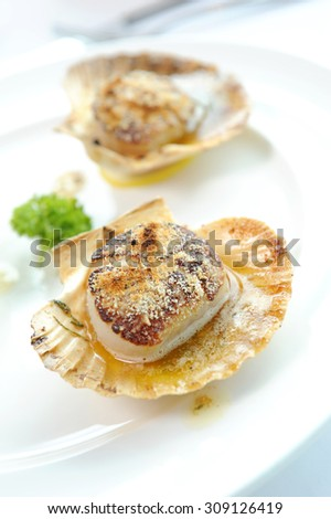 Scallop Close up - stock photo