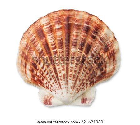 Scallop sea shell isolated on white - stock photo