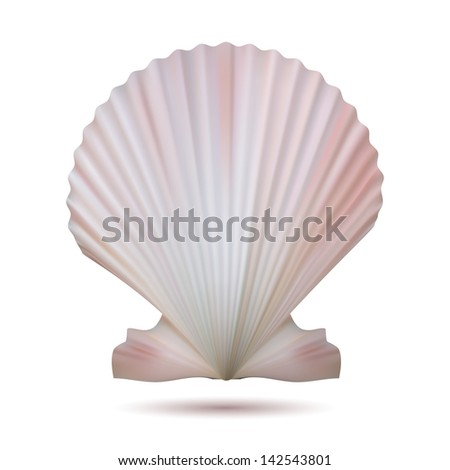 Scallop seashell isolated on white background.