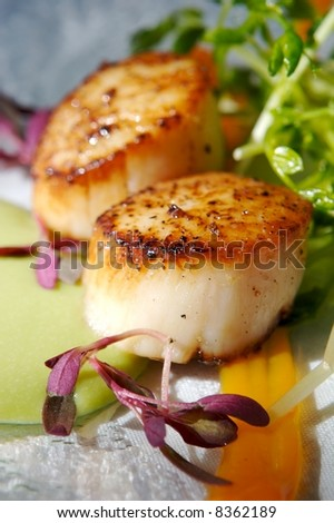 Scallops - stock photo