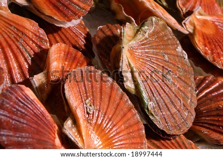 scallops at the market - stock photo