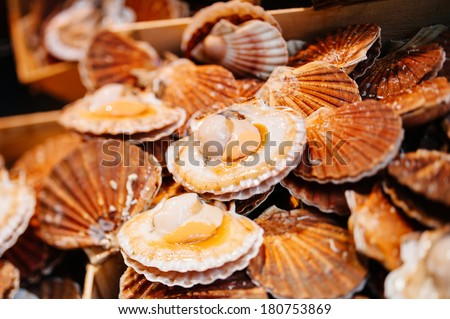Scallops in shell for sale at a fresh seafood market - edible saltwater clams - Pecten jacobaeusm a product high in Omega 3 - stock photo