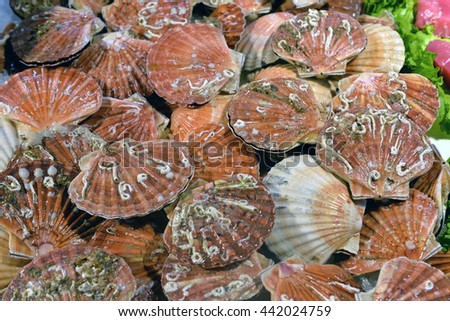 scallops in the shell in the market - stock photo