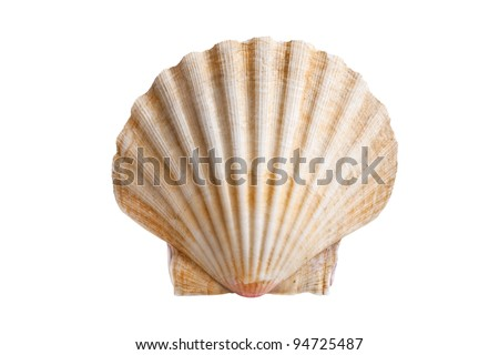 scallops shell (See Pectinidae) on the white background - stock photo