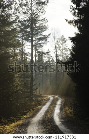 Scandinavian Peninsula, Sweden, Skane, View of empty dirt track passing through forest - stock photo