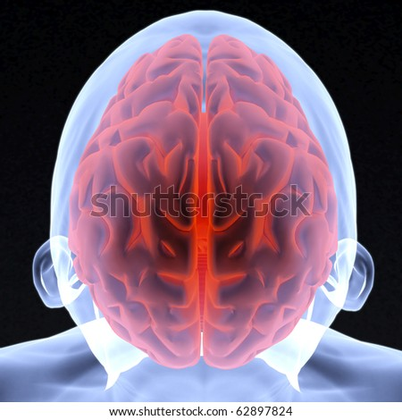 Scanning of a human brain by X-rays. 3d image. - stock photo