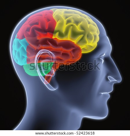 Scanning of a human brain by X-rays. part of the brain highlighted in different colors. - stock photo