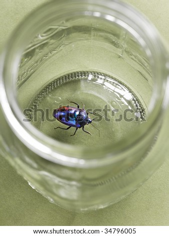 Scarab beetle in jar, elevated view - stock photo