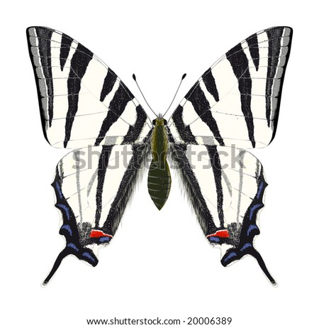 Scarce Swallowtail (Iphiclides podalirius). Rasterized highly detailed vector drawing. - stock photo