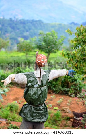 Scarecrow In A Vegetable Garden In Sri Lanka. Scarecrow Is A Decoy In The Shape Of A Human & Placed In Open Fields To Discourage Birds From Disturbing & Feeding On Recently Cast Seed & Growing Crops  - stock photo