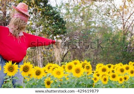 Scarecrow in sunflower field.