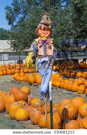 scarecrow over pumpkins - stock photo
