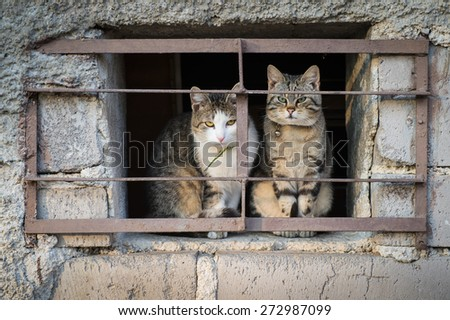 Scared cats behind bars - stock photo
