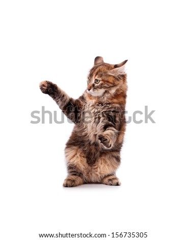 Scared cute kitten, isolated on white background - stock photo