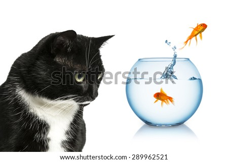 scared goldfish jumping out of a fishbowl in front of a cat  - stock photo