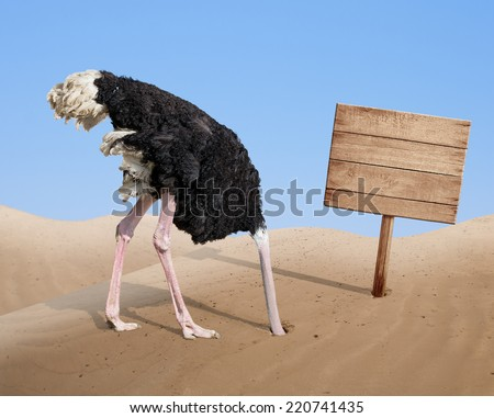 scared ostrich burying head in sand near standing blank wooden signboard - stock photo