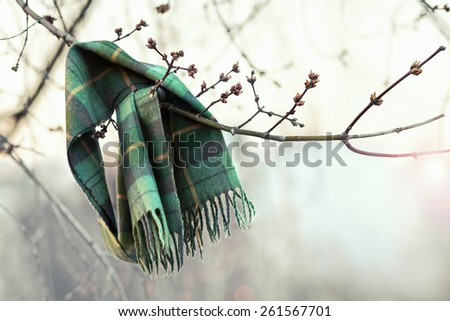 Scarf left on tree branch as a sign that spring has come - stock photo