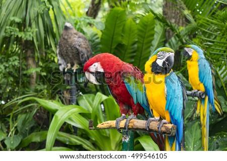 Amazon rainforest stock images royalty free images - Amazon rainforest animals wallpaper ...