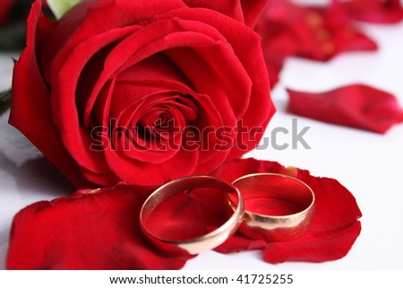 Scarlet rose with wedding rings