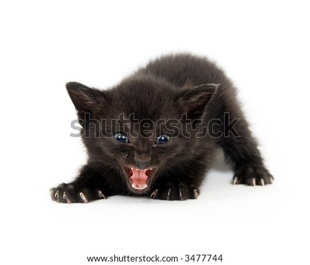 Scary black kitten (focus on mouth) - stock photo