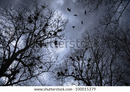 scary crows flying and resting on trees with nests - stock photo