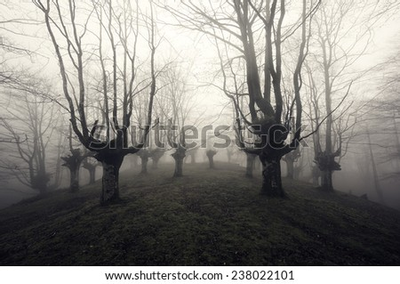 scary forest in black and white - stock photo