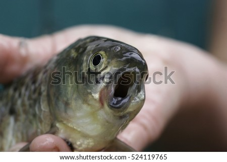 scary funny fish with a crooked mouth in the hand of the fisherman