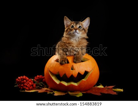 Scary halloween pumpkin jack-o-lantern and somali kitten on black background - stock photo