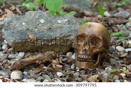 Scary human skull laying on the ground - stock photo