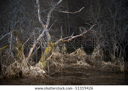 Scary landscape with dead tree in a swamp