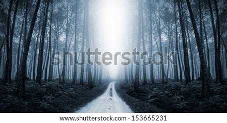 Scary Misty Road in the Forest - stock photo