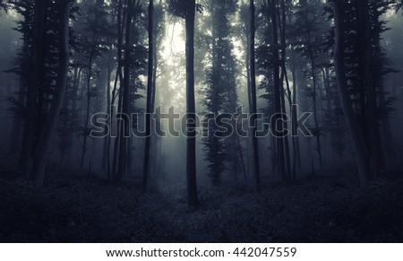 scary night forest scene - stock photo