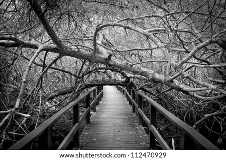 Scary path in a forest - stock photo