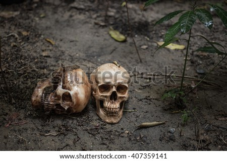scary skull on dirty soil. - stock photo