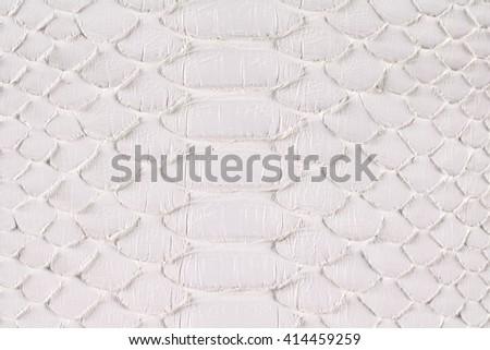 Scary snake skin white background - stock photo