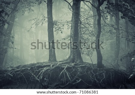 scary trees with roots in a dark forest - stock photo