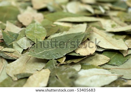 Scattered dried Peruvian Coca leaves in Shallow DOF - stock photo