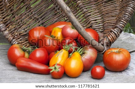 scattered red and yellow tomatoes in a basket on the table - stock photo