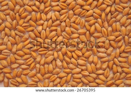 Scattering of grains of wheat. A background