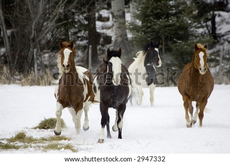 Scene from a horse round up in rural Montana - stock photo