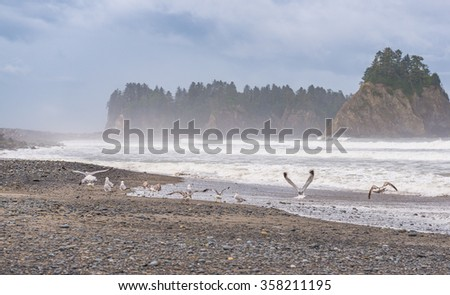 scene  of seagull on the beach with rock stack island on the background in the morning  in Realto beach,Washington,USA. - stock photo