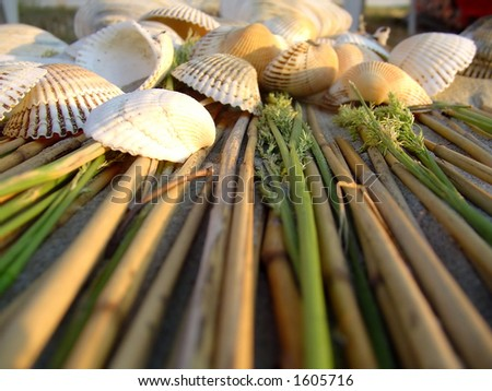 Scene of seashells, green plants,sand and dry-out sticks