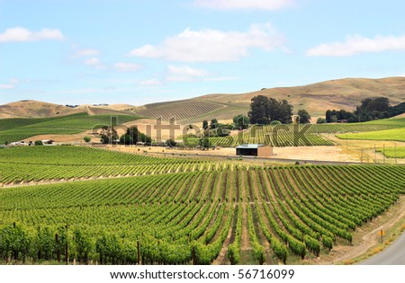 Scene of vineyard field in napa valley - stock photo