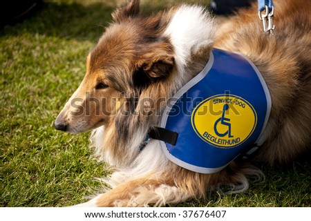 scene on a dog meeting sept. 2009 in kiel, germany - stock photo