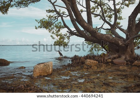 Scene on best desert beach of Miami Key West with white sand on ocean  in tropicalKey Biscayne.Branches with no people under shady big tree and bird fishing unde. Travel and vacations in Florida, USA. - stock photo