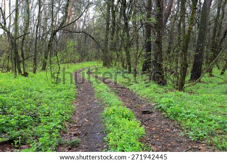 Scene with dirt road in green spring forest - stock photo