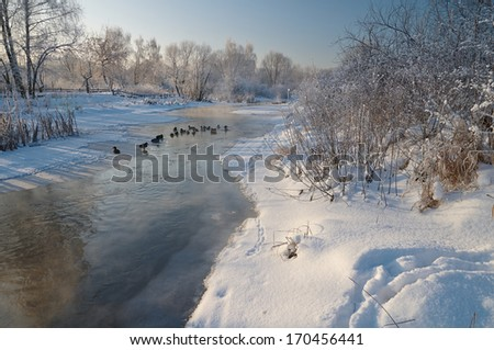 Scene with ducks on the river in winter