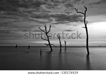 Scenery in black and white of dead trees by the beach during high tide - stock photo