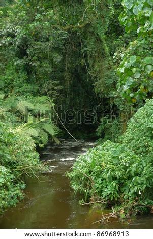 scenery inside the Bwindi Impenetrable Forest in Uganda (Africa) - stock photo