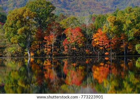 Scenery of autumn lake in the forest, reflecting autumn leaves on the water, Yanohara-shitsugen, Showa-village, Fukushima, Japan